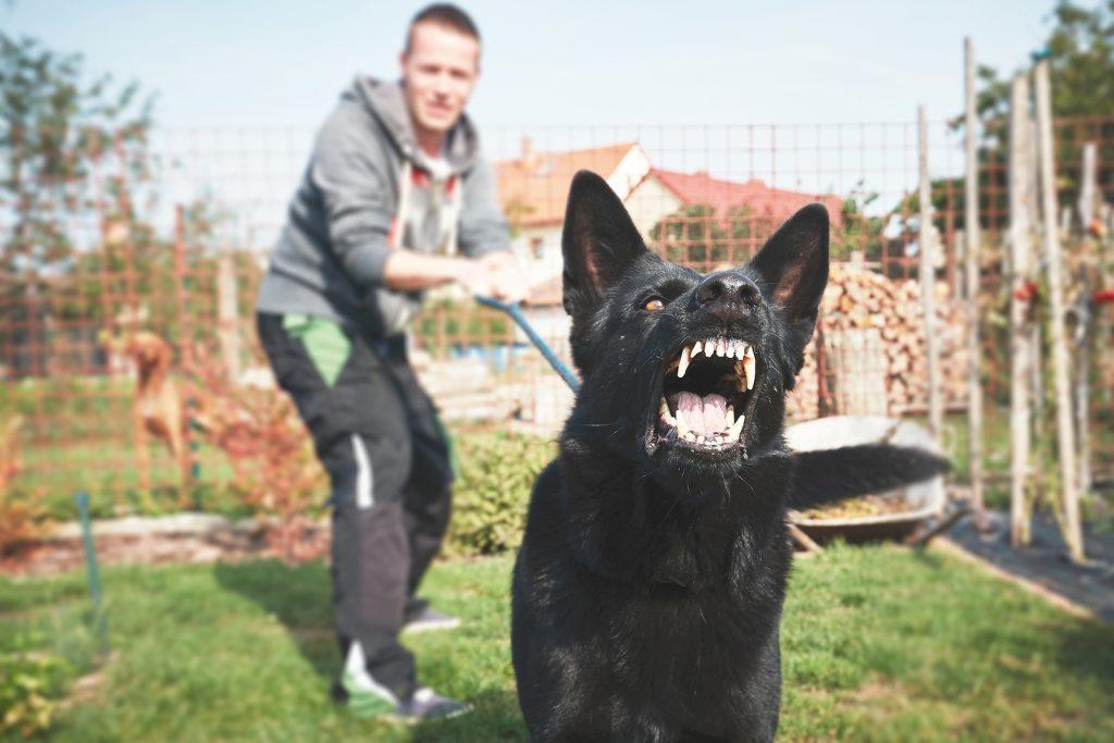 Woburn Dog Bites Attorneys